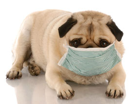 Can Food Allergies Cause Dog To Vomit