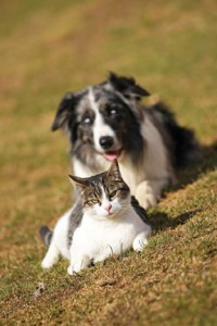 The Dangers of High Blood Sugar – Caring for a Pet with Diabetes