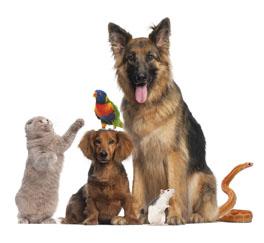 Zip Code Magazines Pet Allergies
